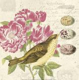 Bird Study 3 Affiches par Paula Scaletta