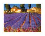 Late Afternoon, Lavender Fields Impressão giclée por Philip Craig