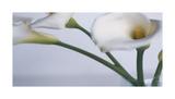 Springplicity I Reproduction procédé giclée par Cinzia Ryan