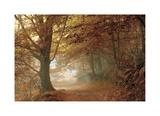 Autumn Dream Giclée-Druck von Toni Vila