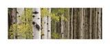 White Forest Standing Gicléetryck av Heather Ross