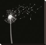 Into the Night II Reproducción de lámina sobre lienzo por Jim Wehtje