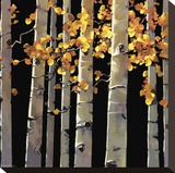 Aspen Grove Stretched Canvas Print by Michael O'Toole