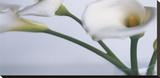 Springplicity I Stretched Canvas Print by Cinzia Ryan
