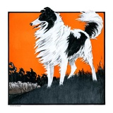 """""""Sheepdog Oversees Flock,""""June 14, 1924 Giclee Print by Paul Bransom"""