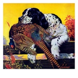 """Retriever with Pheasant,""November 1, 1934 Reproduction procédé giclée par J.F. Kernan"