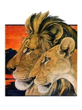 """""""Lion Pair,""""April 27, 1929 Giclee Print by Paul Bransom"""
