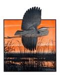 """Marsh Bird,""October 3, 1925 Giclee Print by Paul Bransom"