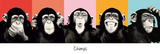 The Chimp - pop Kunstdrucke