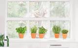 Tutte le mie erbe aromatiche (vetrofania) Adesivo per finestre