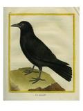 Crow Reproduction procédé giclée par Georges-Louis Buffon