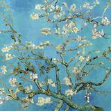 Mandeltre i blomst, San Remy, ca.1890 Kunst av Vincent van Gogh