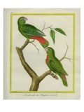 Male and Female Philippine Hanging Parrots Reproduction procédé giclée par Georges-Louis Buffon