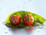 Two Cherry Tomatoes on a Basil Leaf Photographic Print by Roland Krieg