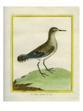 Common Sandpiper Reproduction procédé giclée par Georges-Louis Buffon