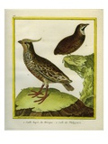 Mexican Crested Quail and the Philippines Quail Reproduction procédé giclée par Georges-Louis Buffon