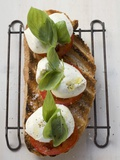 Tomatoes, Mozzarella and Basil on Toasted Bread Fotografie-Druck