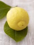 A Lemon with Leaves Fotografisk tryk af Marc O. Finley