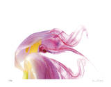 Purple Tulip Abstract No 129 Giclee Print by Shams Rasheed