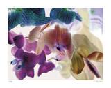 Landscape 3 Reproduction procédé giclée par Kate Blacklock