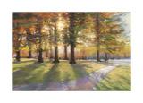 Shadows Giclee Print by Amanda Houston