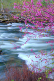 Redbud Riverside Photographic Print by Vincent James
