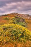 Wildflower Coast Fotografisk trykk av Vincent James