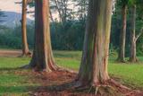 Scene of Rainbow Eucalyptus Fotografisk trykk av Vincent James