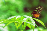 Butterfly Works Photographic Print by Vincent James