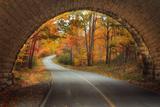 Autumn Tunnel Vision Fotografisk trykk av Vincent James