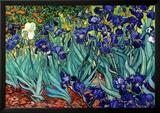 Irisar, Saint-Remy, 1889 Konst av Vincent van Gogh