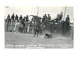 Thrown Bull-Rider, Montana Láminas