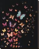 Midnight Butterflies Bedruckte aufgespannte Leinwand