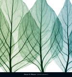 Celosia Leaves II Print van Steven N. Meyers