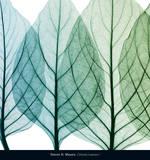 Celosia Leaves I Poster af Steven N. Meyers
