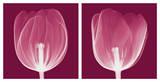 Tulips [Negative] Pôsters por Steven N. Meyers