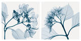 Hydrangeas [Positive] Plakater af Steven N. Meyers