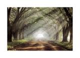 Evergreen Plantation Giclee Print by Mike Jones