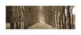 The Shimmering Forest Gicléetryck av Heather Ross