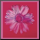 Daisy, c.1982  (crimson and pink) Impressão montada por Andy Warhol