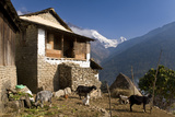 Ulleri Village, 2080 Metres, Annapurna Himal, Nepal, Himalayas, Asia Impressão fotográfica por Ben Pipe