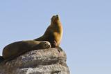 California Sea Lion (Zalophus Californianus), Los Islotes, Baja California Sur, Mexico Lámina fotográfica por Michael Nolan