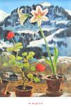 Amaryllis Posters av Alfons Walde
