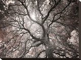 Ethereal Tree Stretched Canvas Print by Michael Hudson
