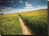 Summer Path Stretched Canvas Print by Michael Hudson