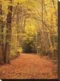 Camino de otoño Reproducción de lámina sobre lienzo por Michael Hudson