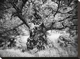 Portrait of a Tree, Study 1 Stretched Canvas Print by Marcin Stawiarz