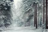 Forest Snow Impressão fotográfica por David Baker