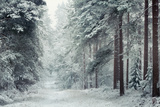 Forest Snow Lámina fotográfica por David Baker