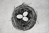 Nest Fotografie-Druck von Susannah Tucker